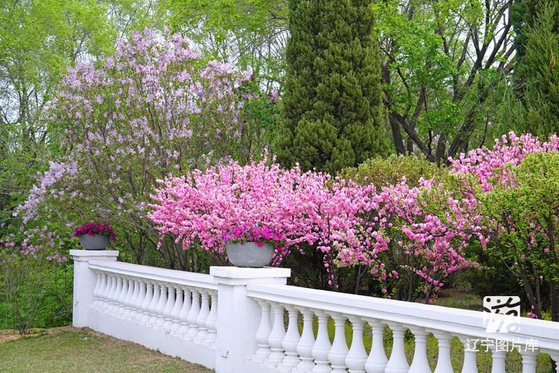 标题:植物园春花16 类型:花卉 拍摄地:沈阳 关键字:植物园 春花 春天